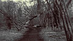 path throght the wilderness (kristof lauwers) Tags: bourgoyen lensbaby lensbabysingleglassoptic path black an white bw nature landscape lensbabybw