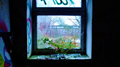 The Nature Comes Back (obscure.atmosphere) Tags: snow schnee nieve neige 雪 눈 nebel fog 霧 안개 neblig foggy silent hill dunst mist niebla bruma brouillard brume ruine ruin ruina industrie industry industria eerie creepy spooky verlassen empty abandoned obscure unheimlich 怖い 소름 atmosphere atmospheric atmosphäre atmosphärisch natur nature naturista naturaleza 自然 자연 wald forest bosque selva foret 森林 숲 woods baum bäume tree trees winter invierno hiver 冬 겨울 hamburg deutschland decay urban urbex forbidden forgotten lost architecture architektur ruinen vergessen