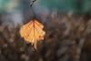 Fantaisie (Aurore.sc) Tags: feuille bokeh jaune automne