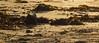 Spot the crab (Farlm) Tags: crab ghostcrab beach sand sandcrab australia fourmilebeach portdouglas queensland qld canon550d seaside