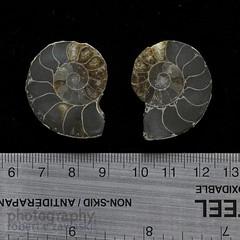 #22 ammonite splits from Madagascar (zawaski) Tags: ammolite ammonite gemstone ©zawaski2018 alberta rare 4sale fengshui fossile 75millionyearsold older presious colour jewelery finesilver sterling silver 925 beautiful value love peace