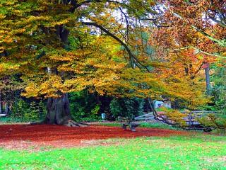 Autumn scenes at Vrieselhof domain in Oelegem, Belgium