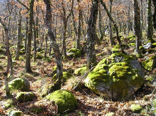 Senderismo por Cascadas Aguas Cemidas Zamora Fotografía Javi Cille (9)