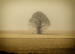 Contre-jour of the day (Claudio Nichele (@jihan65 on Twitter)) Tags: brouillard brume mist fevrier february tree arbre campagne countryside arbres wallonie contrejour againstthelight light lumière aube dawn aurore gel givre frost