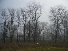 SDC17038 (vale 83) Tags: foggy morning samsung pl65 crepaja serbia friends