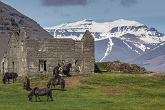 Ruin with Horses (Oleg S .) Tags: iceland ruin nature mountains architecture farm horse flickr animal