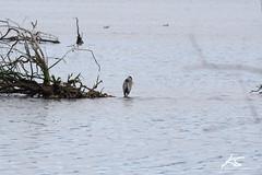 _DSC6314.jpg (kasperisummanen) Tags: birds nisquallynationalwildliferefuge wa pnw wildlife