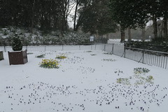IMG_1758 (lusciousblopster) Tags: snow snowing sneachta white dublin ireland irish snowy winter blizzard flurry storm emma beast from east weather ice icy flake snowflake snowfall whiteout city urban buildings cityscape landscape beastfromeast stormemma eire eireann erin aimsir