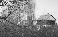Egret at the farmhouse (dusk_rider) Tags: egret farmhouse england britain uk united kingdom hertfordshire