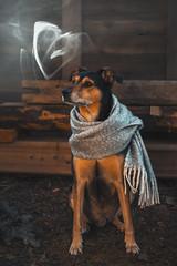 Love needs no words (mirri_inc) Tags: scarf heart smoke fog animal love mood folk