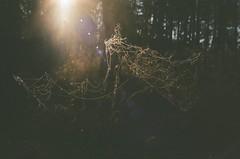 000116400015 (MatveyKarmakov) Tags: nikon nikonf3 kodak 35mmfilm morning film analog filmisnotdead filmphotography filmphoto filmcamera filmlandscape filmcommunity onfilm ishootfilm wood forest folk livefolk