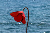 Lonely Poppy (Tony Howsham) Tags: os 18250 sigma 70d eos canon creative art poppy