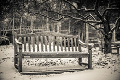 Cold Again (Fret Spider) Tags: cold winter chicago chicagobotanicalgardens glencoeil outside snow bench chair sit toned sepia monochrome mono vignette bokehdelicious bokeh dof depthoffield oof outoffocus classic manual vintage fd canonfd50mmf12l sonya7ii mirrorless adaptor tree grounds nature outdoors season visit wideopen isolation chill blustery nippy drift weather morning seat geometric woods