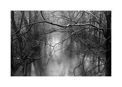 (billbostonmass) Tags: adox silvermax 100 129silvermax1100min68f film fm2n 40mm ultron sl2 epson v800 massachusetts creek