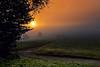 Colours for me (Rita Eberle-Wessner) Tags: landscape landschaft baum tree gras grass weg path sonne sonnenaufgang sunrise sun nebel fog frühnebel morgen morning wiese meadow sky himmel orange rural ländlich odenwald herbst autumn fall twb