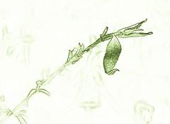Backyard Life - HSS (Daryll90ca) Tags: leaf plant green sliderssunday hss
