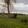Tree Trunks [3] (jwbeatty) Tags: 6x6 analog carlzeissplanar80mmf28 film filmphotography filmisnotdead hasselblad500cm illinois ishootfilm kodak landscape mchenry mediumformat morainehillsstatepark nature portra400 square trees