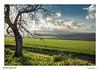 Distances (Raul Kraier) Tags: green valley contrast evening distances clouds canon 6d wheat lejania light