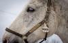 Monte (Lee J2) Tags: horse equine monte canadianwarmblood gelding portrait ryerssfarm pottstown pennsylvania