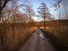 Reeding the Track (_J @BRX) Tags: grass sunset blue gold yellow orange rspb leightonmoss january2018 lancashire england uk winter reeds tree lane light path iphone