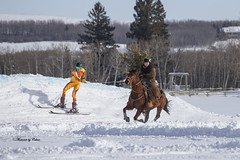 Skijoring 1 (Canon Queen Rocks (1,980,000 + views)) Tags: animals horses horse animal snow rider saddle winter skier towing alberta wintersport outdoors white trees tree