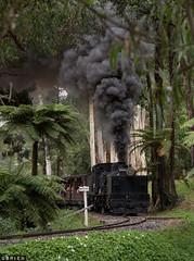 Garratt (Dobpics O'Brien) Tags: garratt gauge narrow g42 gembrook locomotive lakeside billy belgrave selby pbr puffingbilly puffing pbps pass engine rail railway railways train steam victorian victoria vr