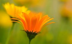 flowershot -7504634 (@nikondxfx (instagram)) Tags: 2018 d750 delhi delhigram nikkor nikon nikond750 raw february fullframe lightroom winter flowerphotography flower flora flowers green