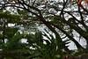 Laguna de Apoyo, Nicaragua (zug55) Tags: lagunadeapoyo nicaragua laguna lake lago apoyo apoyolagoon lagoon masaya casamarimba lagunadeapoyonaturereserve reservanaturallagunadeapoyo volcaniclake volcano crater volcán