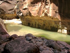 Green and Gold Virgin River (Annes Travels) Tags: zionnationalpark utah zionnarrows canyon virginriver desert