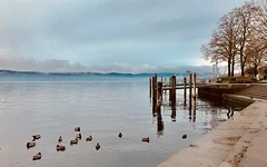 Bodensee im Winterschlaf (3) (Niwi1) Tags: winter travel trip shore lakeconstance lake water überlingen germany ufer see wasser bodensee outdoor niwi1