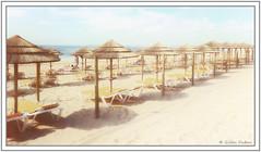 Parasols au soleil (GilDays) Tags: portugal algarve alvor port2017 portimao plage beach jaune yellow beachumbrella parasol umbrella ombrelle sable sand