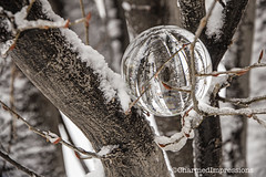 Winter Orbuculum (livininfrostytown) Tags: snow snowstorm storm weather fun winter utah 2018 charmedimpressions frostytown white crystalball oracle orbuculum sphere clear globe glass lensball refraction reflection wideangle photography
