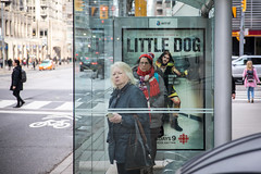 Get In Line (cookedphotos) Tags: 2018inpictures toronto ontario canada canon 5dmarkiv streetphotography college ttc busstop cbc poster advertisement littledog joelthomashynes women waiting 365project p3652018