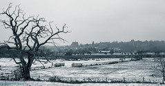 winter landscape (Rourkeor) Tags: arundel england unitedkingdom gb bw landscape tree castle cathedral snow cold freezing winter olympus omd em1mk2 12100mmpro