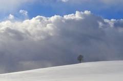 White Land (Tobi_2008) Tags: schnee snow himmel sky baum tree wolken clouds sachsen saxony deutschland germany allemagne germania
