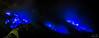 Ijen Blue Fire 2 (jerome_fang) Tags: surabaya bromo mountbromo blackwhite volcano volcanoes