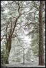 _DSC6472-Edit.jpg (jezqio) Tags: uppsala 50mm nikon winter frost sweden nikkor d810 handheld