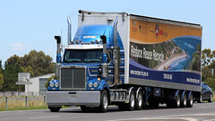 FATE Transport (Jungle Jack Movements (ferroequinologist)) Tags: f a t e fate transport western star fantastic great looking princes freeway geelong lara melbourne victoria recycle recycling truck tractor prime mover diesel motor engine driver cab cabin exhaust loud rumble hood hp horsepower haul haulage freight vic trucker drive carry delivery bulk lorry hgv wagon road highway nose semi trailer deliver cargo interstate articulated vehicle load freighter ship move roll power grunt teamster cummins