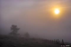Silencio y mucha calma (Jabi Artaraz) Tags: jabiartaraz jartaraz zb euskoflickr paz silencio calma sol sun siluetas bruma niebla libertad aslatasuna bakea encuentro búsqueda nature