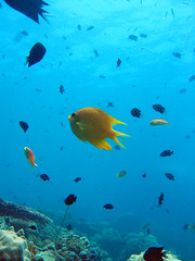 SOLOMON (4) (stevefenech) Tags: oceania south pacific islands adventure travel backpacking stephen fenech fennock fun solomon