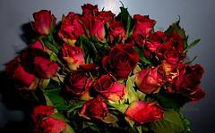 A weekend Bouquet (abrideu) Tags: abrideu panasonicdmctz20 red roses flowers flower bouquet ngc npc