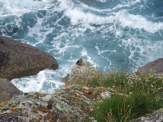 Sparsely vegetated granite cliff crag with rock pipit