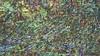 Landwirtschaftliche Geraete 47 (wos---art) Tags: bildschichten landwirtschaft geräte geschichte handwerk pflug egge