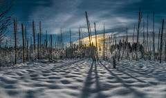 Winter shadows (Explored) (Tore Thiis Fjeld) Tags: norway oslo nordmarka maridalen winter snow forest cold sky sunset sun clouds shadows panorama halo lines sonya6000 outdoors wilderness nature frozen ice color explore
