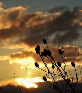 Sunrise and Teasel Heads - Druridge Ponds