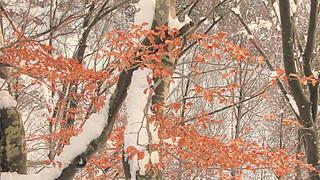 * Passo Della Colla #7 / Decorazione di foglie * Leaves decoration  *   ( in Explore )