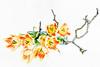 Contrasts (macplatti) Tags: tulpe tulips color contrast koblach vorarlberg austria aut red yellow green blue