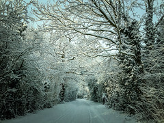 My drive to work (Sheldrickfalls) Tags: snow snowylandscape iphone apple norfolk england uk