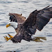 Eagle Fishing 2018