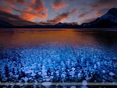 Thousands of Bubbles (Normsnature) Tags: abraham lake fujifilm gfx50s normanngphotography nature landscape bubble sunrise sunset ice blue